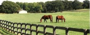 Rerun & Radar in pasture