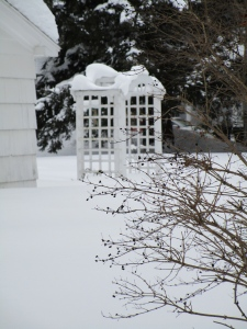 my neighbor's trellis