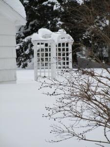my neighbor's trellis